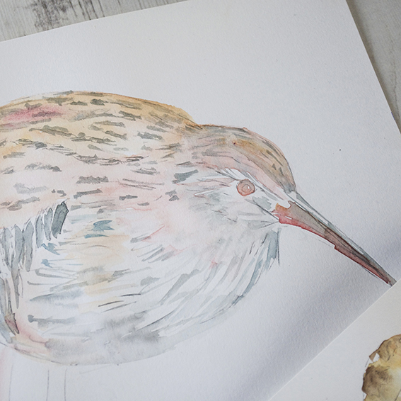 Wading birds work in progress (c) Ella Johnston/Dunlin Press