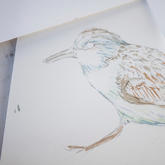 Wading birds work in progress (c) Ella Johnston/Dunlin Press