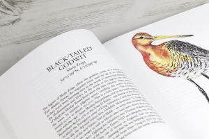 THE MIGRANT WADERS, DUNLIN PRESS