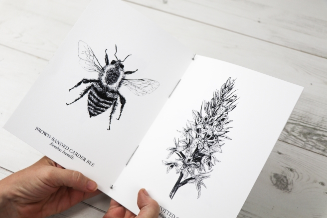 Hand-stitched black and white botanical and insect studies booklet